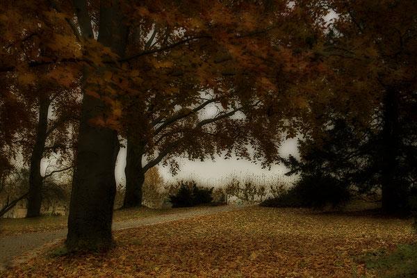 Herbstliche Wege - © Helga Jaramillo Arenas - Fotografie und Poesie / November 2017