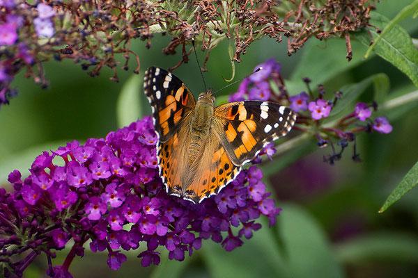 Sommerglück - © Helga Jaramillo Arenas - Fotografie und Poesie / Juli 2015