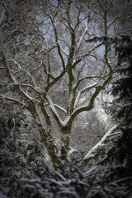 Das Herz der Bäume (1) - © Helga Jaramillo Arenas - Fotografie und Poesie / März 2016