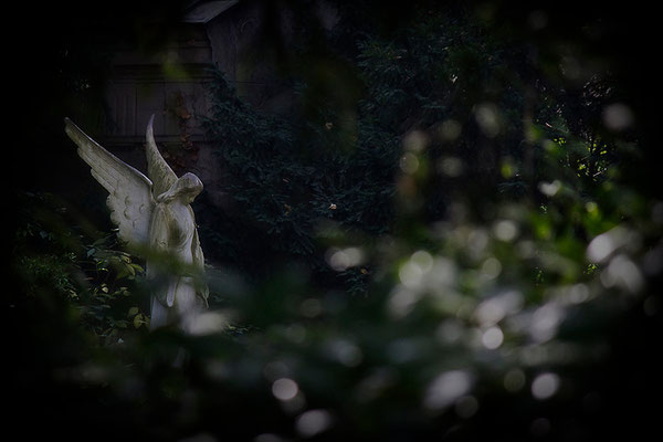 Wenn Engel zart ihr Licht verschenken - © Helga Jaramillo Arenas - Fotografie und Poesie / Oktober 2013