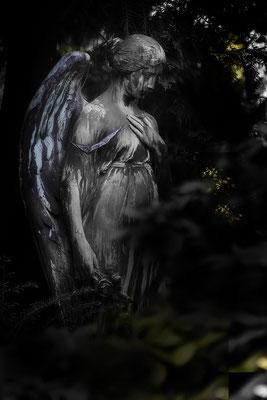 Lass Dir blaue Flügel wachsen -  © Helga Jaramillo Arenas - Fotografie und Poesie / Mai 2021