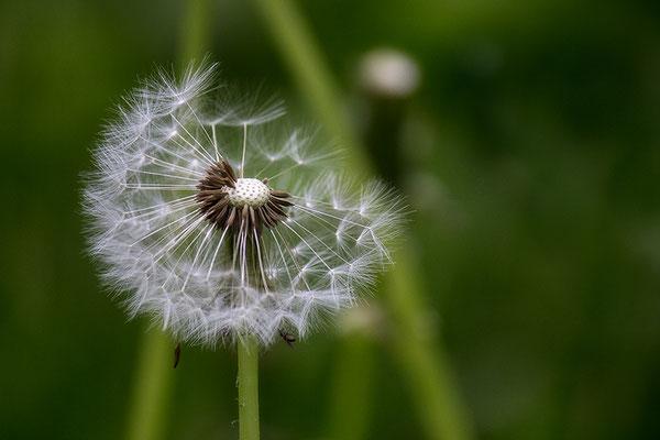 Kind des Windes (1) - © Helga Jaramillo Arenas - Fotografie und Poesie / Januar 2019