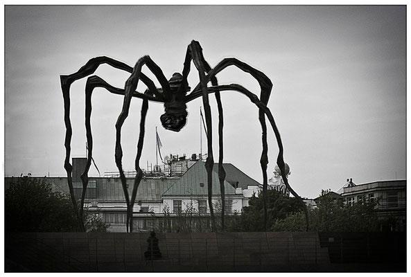 Der Spinnenanbeter - © Helga Jaramillo Arenas - Fotografie und Poesie / Juni 2012