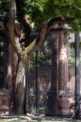 Der stille Bewacher- © Helga Jaramillo Arenas - Fotografie und Poesie / August 2020