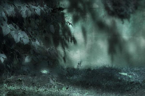 In herbstlichen Schatten -  © Helga Jaramillo Arenas - Fotografie und Poesie / September 2021