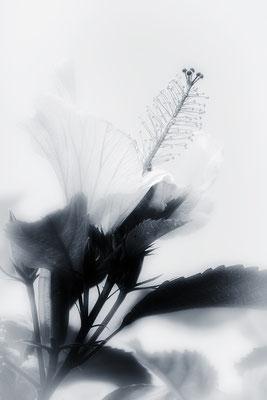 Berührung (2) - © Helga Jaramillo Arenas - Fotografie und Poesie / September 2018
