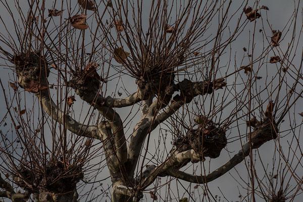 Das Aufbegehren der Bäume - © Helga Jaramillo Arenas - Fotografie und Poesie / November 2017