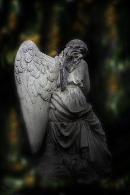 Welch´  ungeheuerlicher Verlust - © Helga Jaramillo Arenas - Fotografie und Poesie / Januar 2017