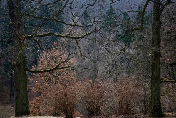 Der Schlaf der Bäume - © Helga Jaramillo Arenas - Fotografie und Poesie / April 2011