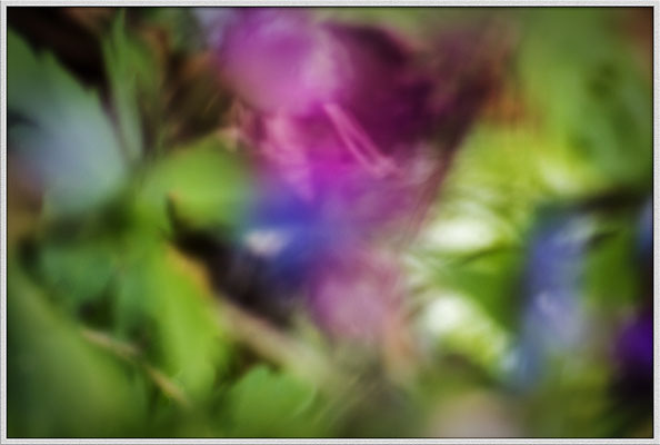 Das Wesen der Pflanzen (2) - © Helga Jaramillo Arenas - Fotografie und Poesie / April 2019