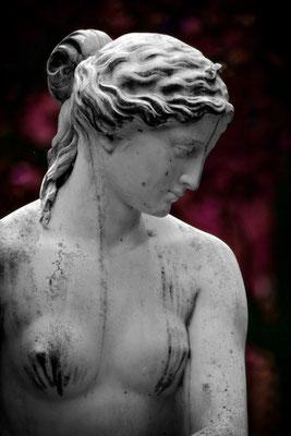 Die Schönheit der Venus - © Helga Jaramillo Arenas - Fotografie und Poesie  / Februar 2015