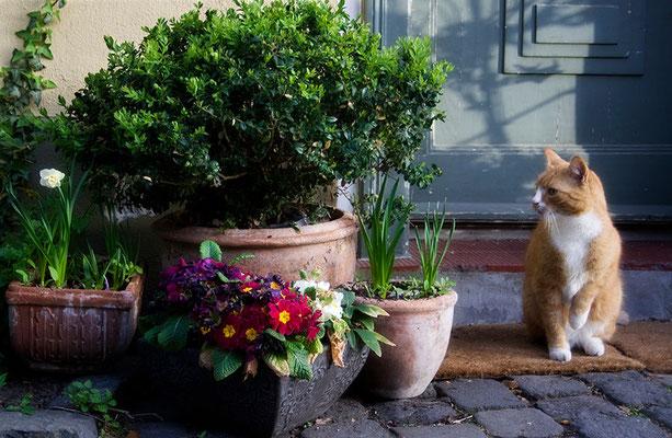 Erinnerung an Frühlingstage - © Helga Jaramillo Arenas - Fotografie und Poesie / April 2011
