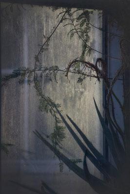 Das geheime Leben der Pflanzen - © Helga Jaramillo Arenas - Fotografie und Poesie / Januar 2014