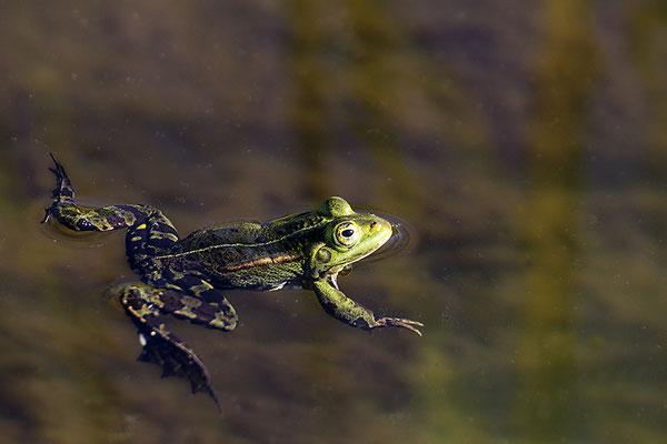 In stillen Gewässern -  © Helga Jaramillo Arenas - Fotografie und Poesie / Juni 2021