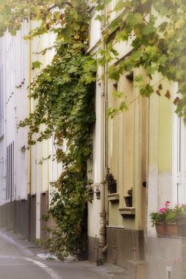 In der Weinstraße / Boppard am Rhein - © Helga Jaramillo Arenas - Fotografie und Poesie / Oktober 2018