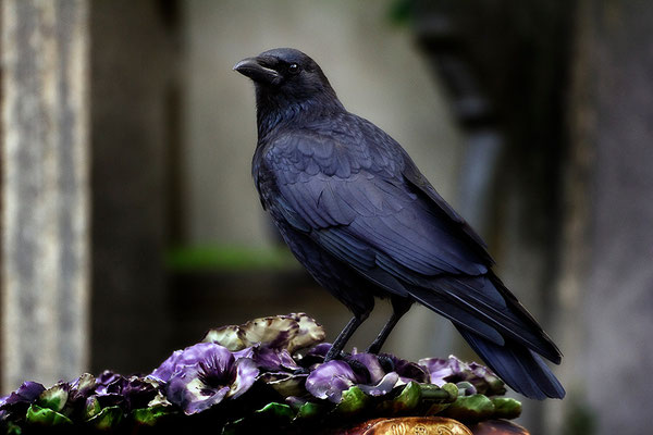 Schattenvogel - © Helga Jaramillo Arenas - Fotografie und Poesie / Oktober 2015