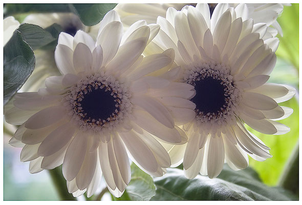 Weiß - © Helga Jaramillo Arenas - Fotografie und Poesie / Juni 2012