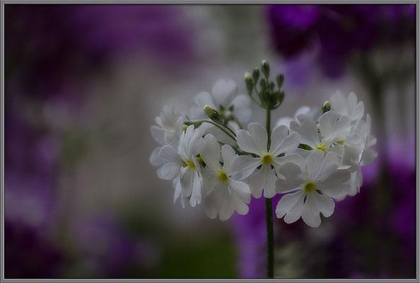 Frühlingstanz - © Helga Jaramillo Arenas - Fotografie und Poesie / Februar 2017