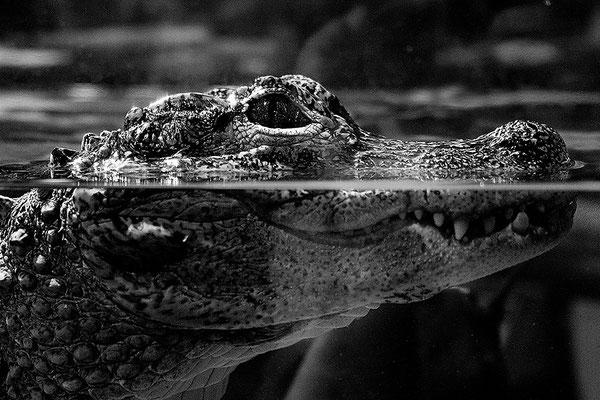 In Gefangenschaft - © Helga Jaramillo Arenas - Fotografie und Poesie / Februar 2011