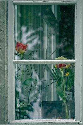 In Erwartung des Frühlings - © Helga Jaramillo Arenas - Fotografie und Poesie / Januar 2015