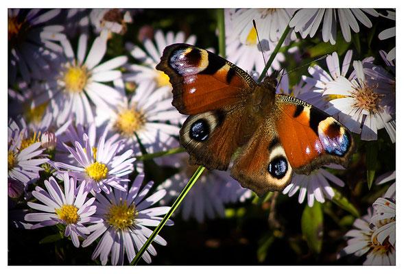 Frühlingsträume - © Helga Jaramillo Arenas - Fotografie und Poesie / Oktober 2011