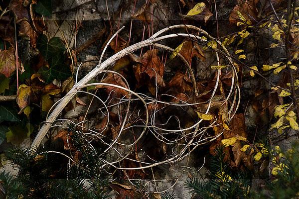 Die Sprache des Winters (3) - © Helga Jaramillo Arenas - Fotografie und Poesie / November 2011