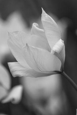 Vom Frühling geschickt (5) - © Helga Jaramillo Arenas - Fotografie und Poesie / April 2017