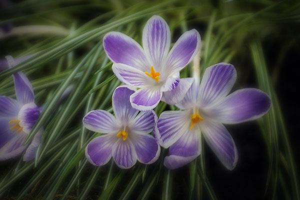 Die Freude des Frühlings - © Helga Jaramillo Arenas - Fotografie und Poesie / Dezember 2018