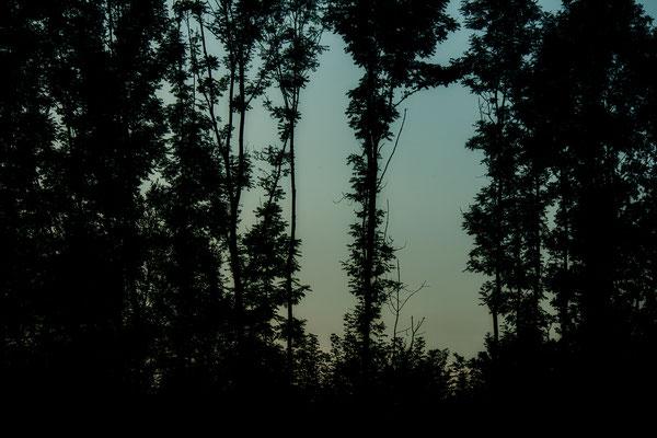Stille des herannahenden Abends - © Helga Jaramillo Arenas - Fotografie und Poesie / August 2016