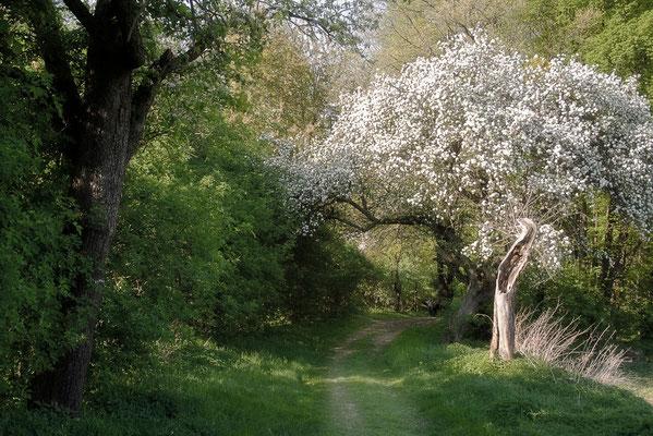 Spaziergang der Gedanken (1) - © Helga Jaramillo Arenas - Fotografie und Poesie / April 2011
