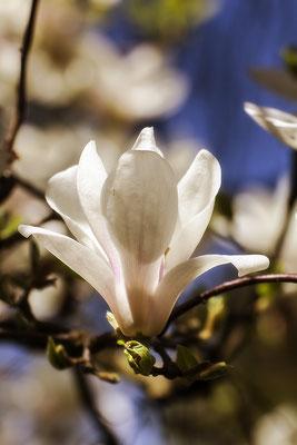 Zarte Frühlingsgrüße - © Helga Jaramillo Arenas - Fotografie und Poesie / April 2020