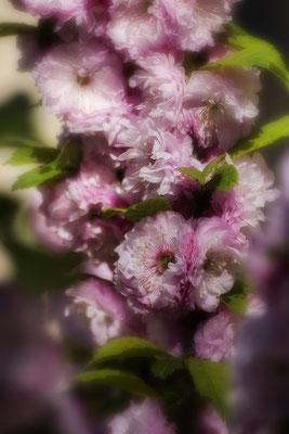 Frühlingsträume - © Helga Jaramillo Arenas - Fotografie und Poesie / April 2020