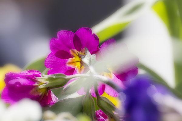 Frühlingsfrische - © Helga Jaramillo Arenas - Fotografie und Poesie / April 2017