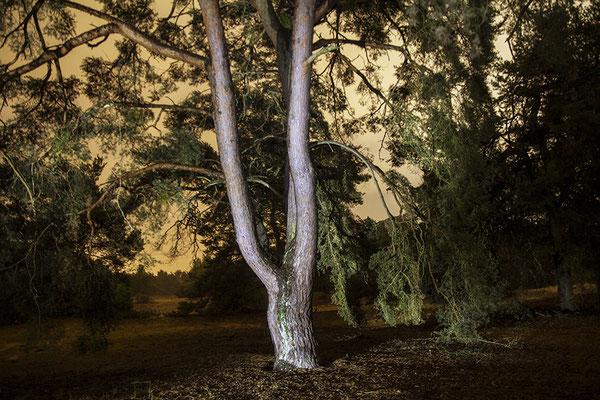 Der Baum (2) - © Helga Jaramillo Arenas - Fotografie und Poesie / September 2018