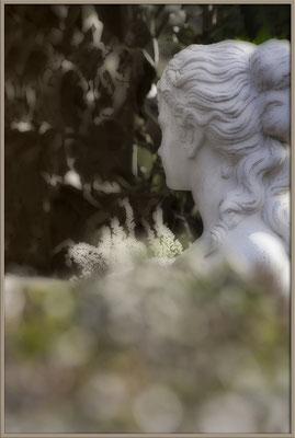 Hinter der Gartenhecke - © Helga Jaramillo Arenas - Fotografie und Poesie / Februar 2017