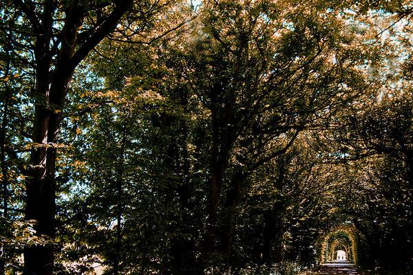 Lichtzauber unter Bäumen - © Helga Jaramillo Arenas - Fotografie und Poesie / Juni 2015