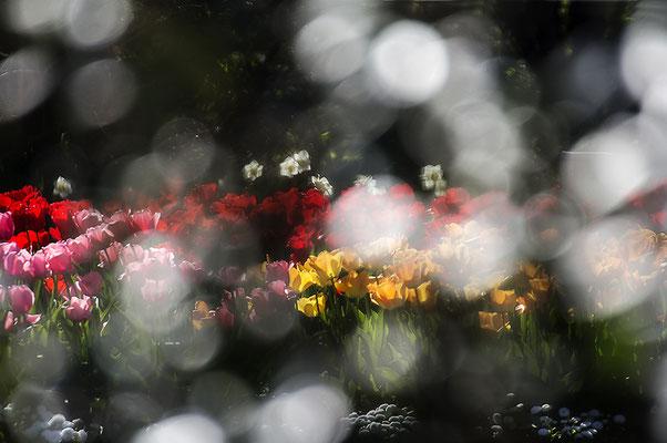 Sonnenlachen - © Helga Jaramillo Arenas - Fotografie und Poesie / April 2020