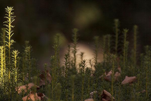 Immerwährendes Licht - © Helga Jaramillo Arenas - Fotografie und Poesie / November 2019