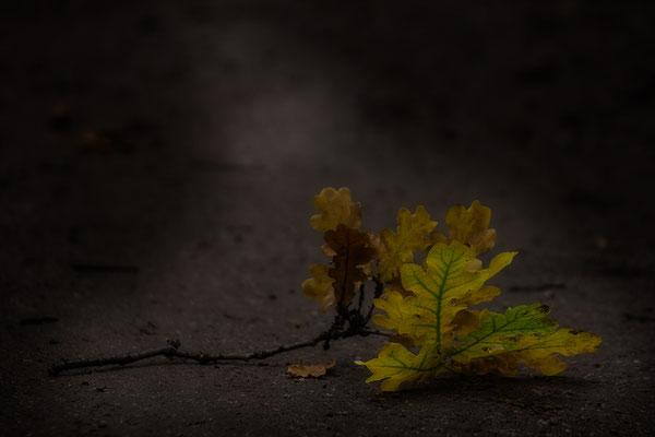 Der Herbst - © Helga Jaramillo Arenas - Fotografie und Poesie / September 2017