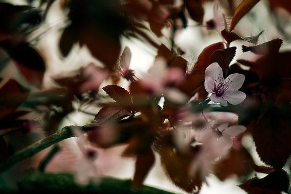 Frühlingserwachen - © Helga Jaramillo Arenas - Fotografie und Poesie / März 2014