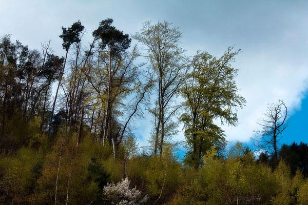 Die leisen Gespräche der Bäume mit dem Wind - © Helga Jaramillo Arenas - Fotografie und Poesie / April 2015