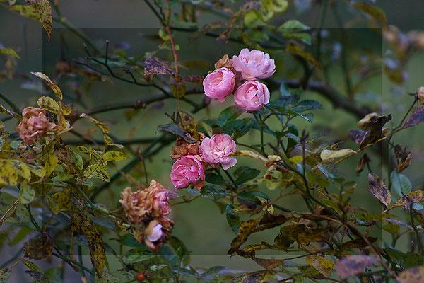 Die Sprache des Winters (1) - © Helga Jaramillo Arenas - Fotografie und Poesie / November 2011