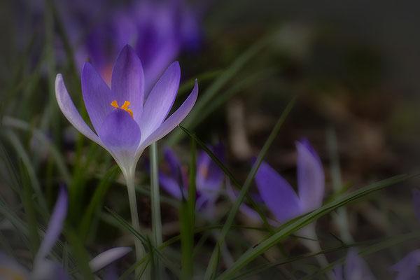 Frühlingserwachen - © Helga Jaramillo Arenas - Fotografie und Poesie / März 2018
