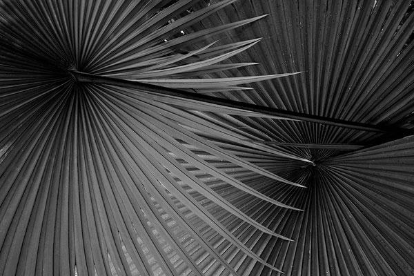 Betörendes Gleichmaß - © Helga Jaramillo Arenas - Fotografie und Poesie / April 2011