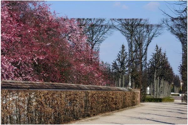 Wenn der Frühling kommt / Schloßgarten Schwetzingen - © Helga Jaramillo Arenas - Fotografie und Poesie / März 2015