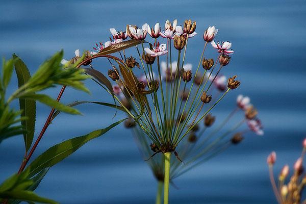 Am Wasser - © Helga Jaramillo Arenas - Fotografie und Poesie / Juli 2013