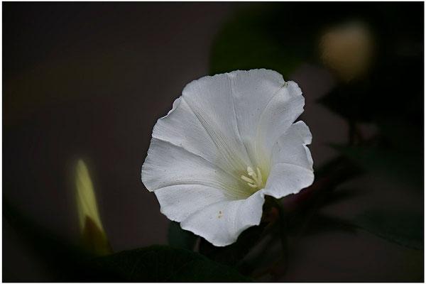 Verzaubernde Anmut - © Helga Jaramillo Arenas - Fotografie und Poesie / Oktober 2012