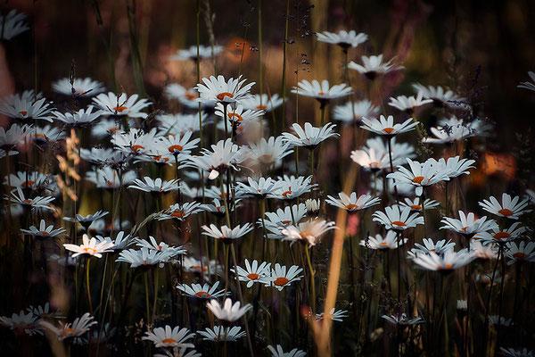 Reichtum - © Helga Jaramillo Arenas - Fotografie und Poesie / Juni 2015