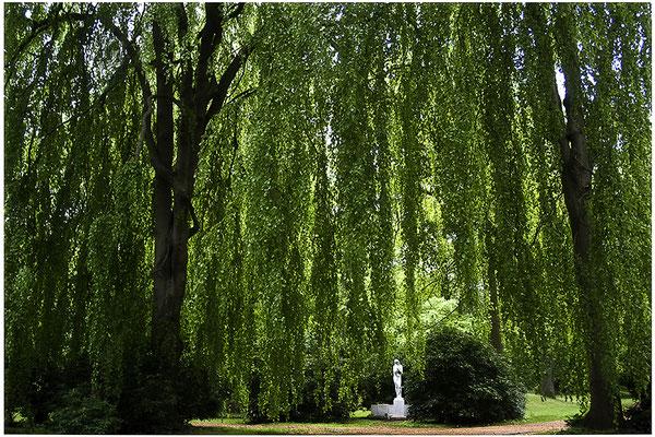 Unter schützenden Bäumen - © Helga Jaramillo Arenas - Fotografie und Poesie / Juni 2012