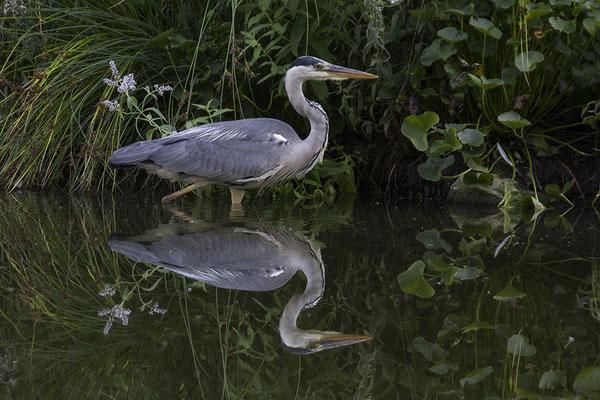 Der Doppelgänger - © Helga Jaramillo Arenas - Fotografie und Poesie / August 2017